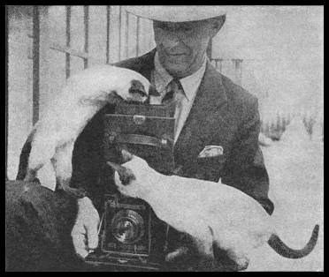 Photographer Rost with Fairchild Cattery Siamese