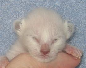 Jade at six days old