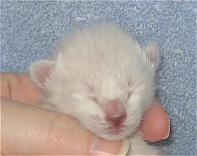 Lilac at six days old
