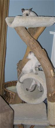 Amber with her legs in the tube, Lilac on the tube and Jade on top of the tree.
