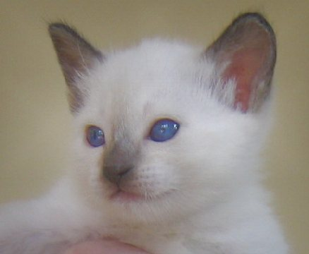 Berry at four weeks of age