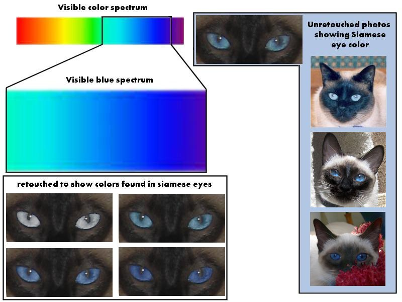 Can Cats See Color Or Black And White 28 Images Cat Color Vision Cat Vision Eyesight And How